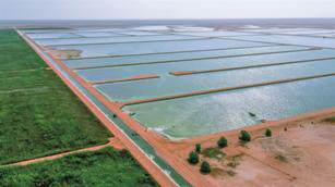 BAUER Expansion wetland treatment plant Oman 2 Gro